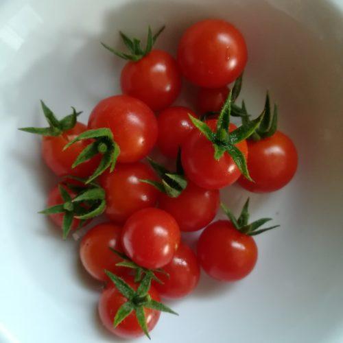 tomate brute NOVA
