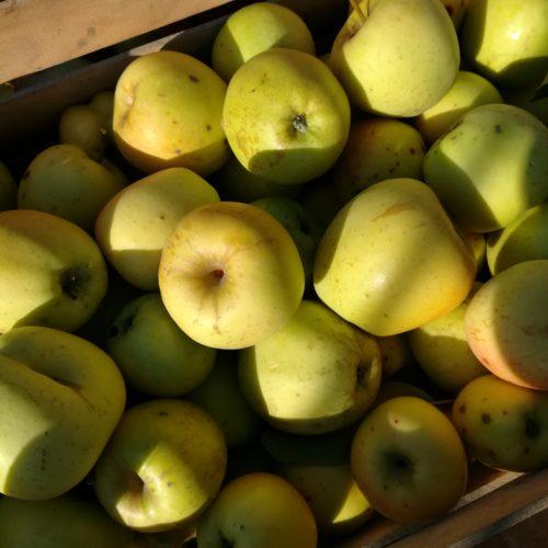 pommes NOVA