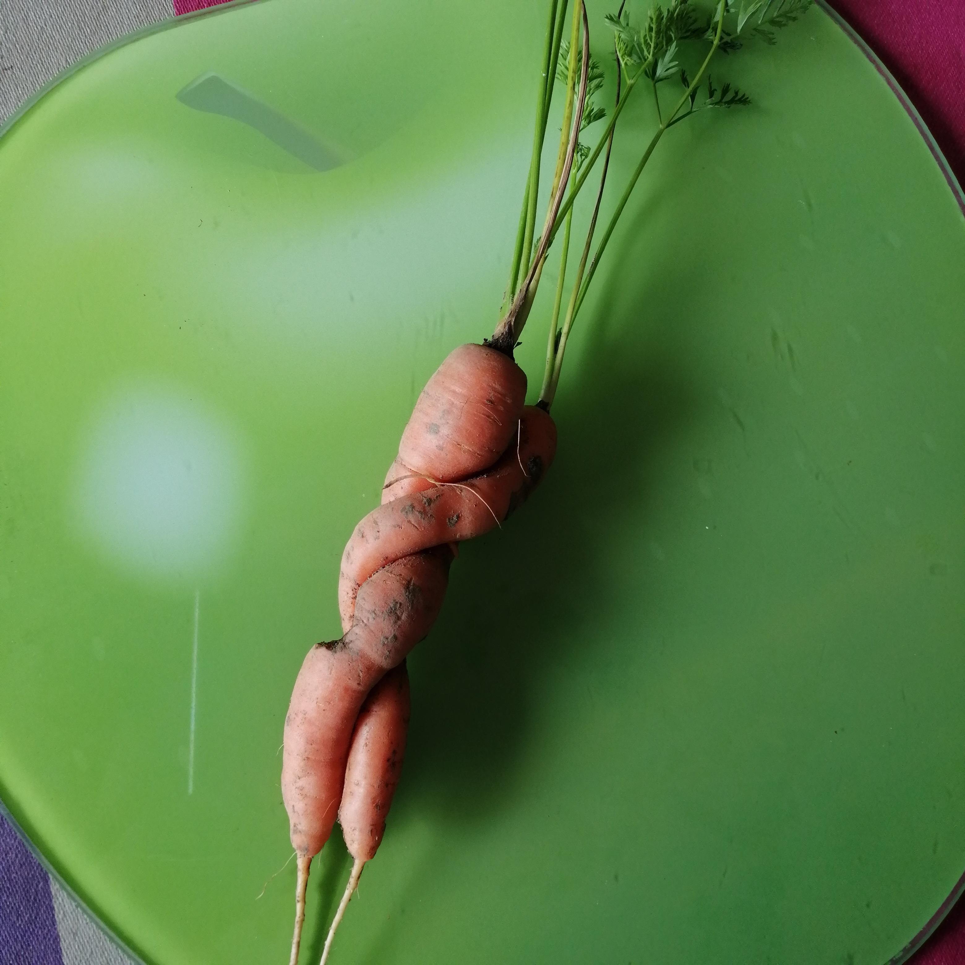carottes amoureuses